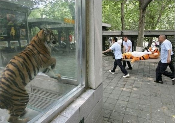 funny-zoo-photo